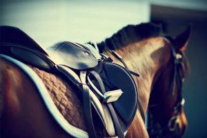 Horsebox Licence Training