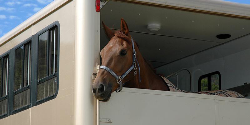 Horse In A Horsebox
