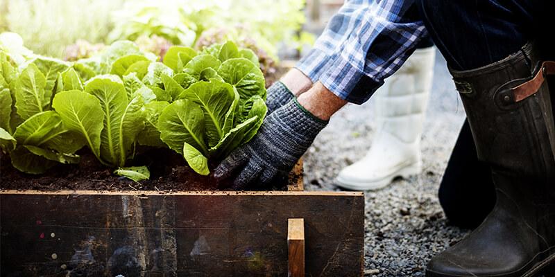 Gardener Planting in Soil