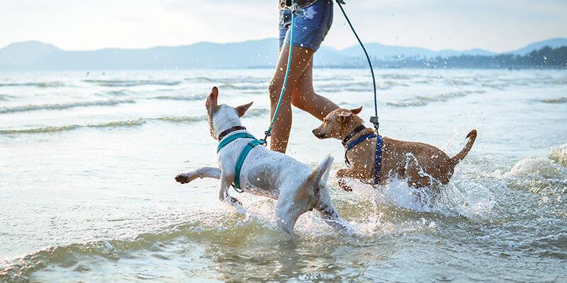 dogs running through the sea